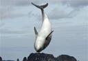 Japan Oscars Dolphin Hunting