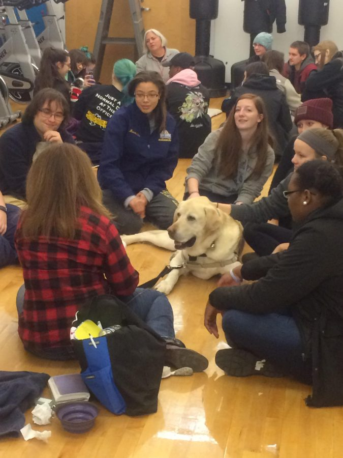 History Behind Therapy Dog Visits