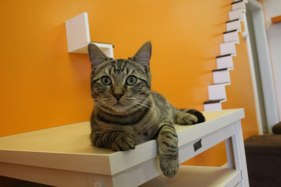 Connecticut's First Cat Café Opens in New Haven