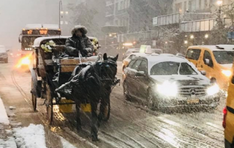 Why You Need to Avoid Horse Drawn Carriage Rides During the Holidays